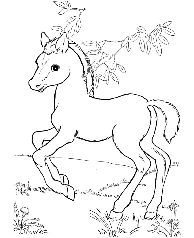 horse coloring image free and printable horse color pictures activity shelter image horse coloring