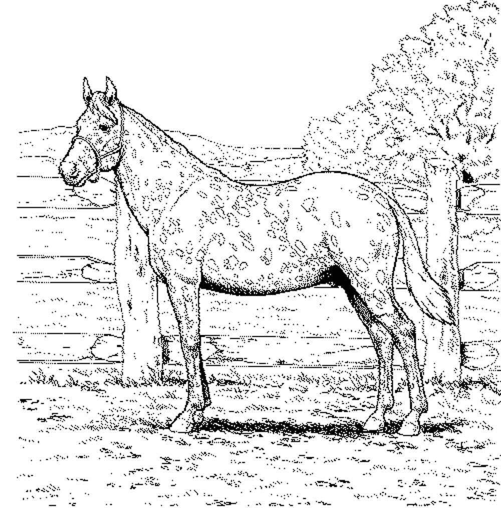 horse coloring image free horse coloring pages for adults kids cowgirl magazine image coloring horse 1 1