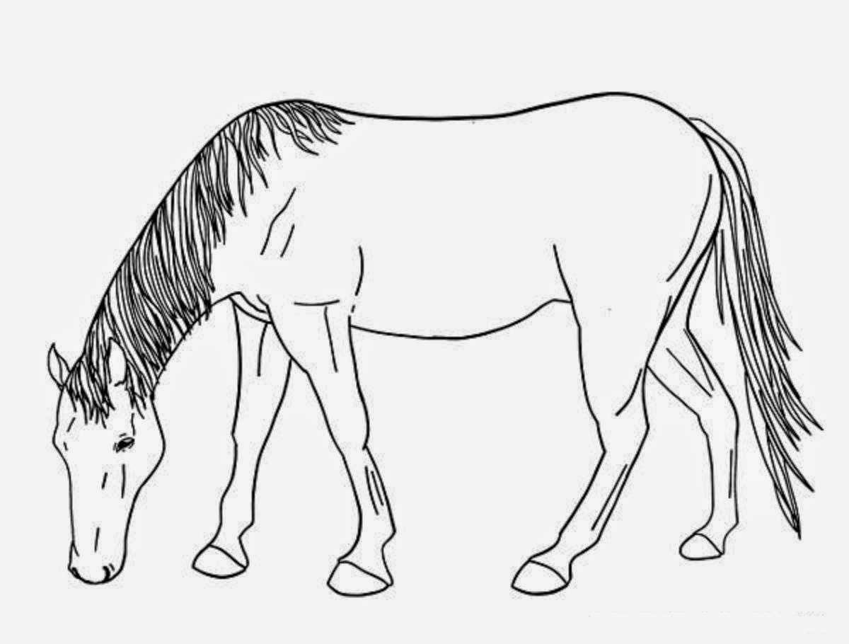 horse drawing coloring pages colour drawing free hd wallpapers horse for kids coloring drawing coloring horse pages