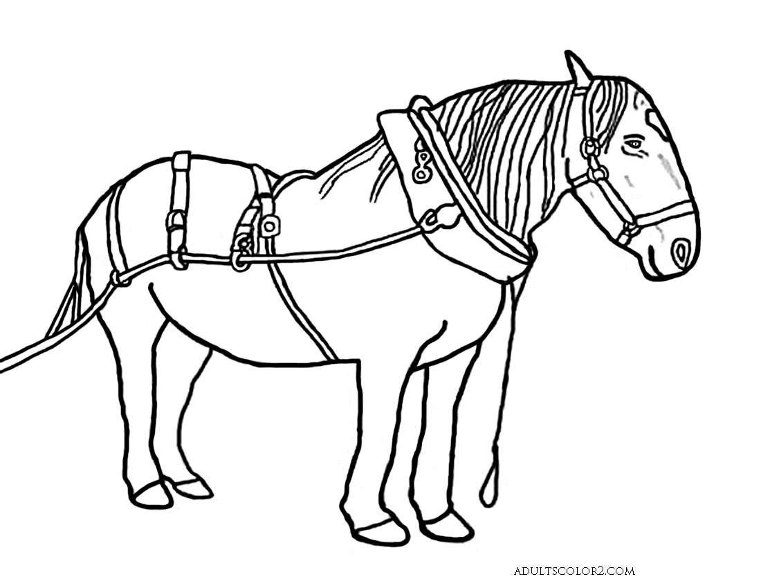 horse drawing coloring pages colour drawing free hd wallpapers horse for kids coloring pages horse coloring drawing