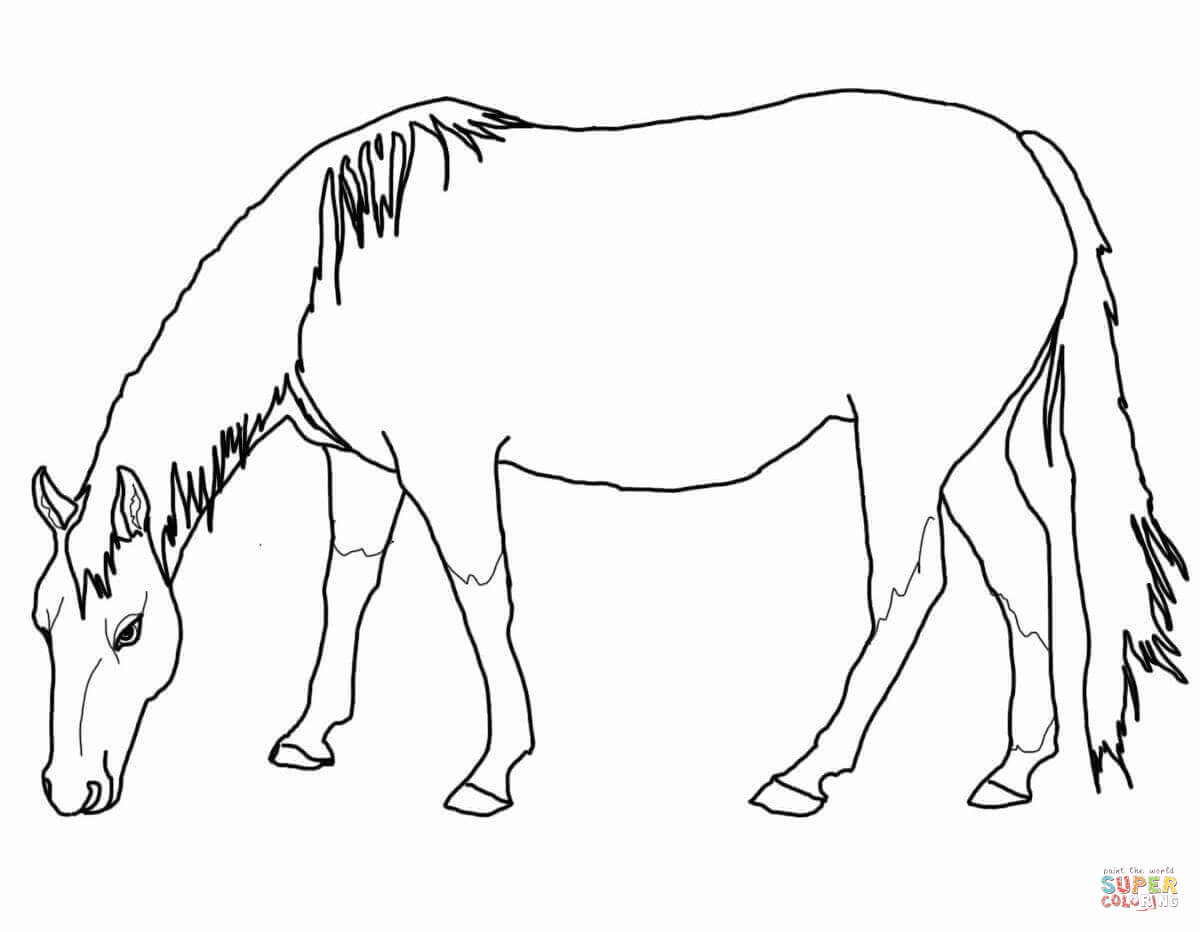 horse drawing coloring pages horse drawing book at getdrawings free download drawing pages horse coloring