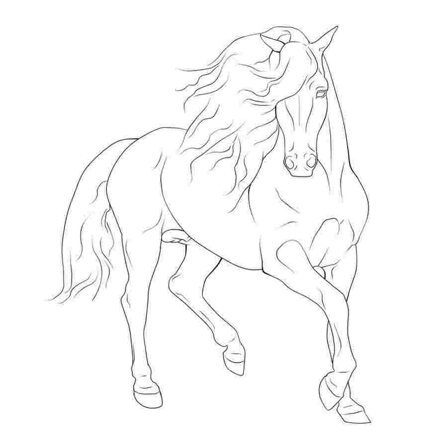 horse drawing coloring pages horse drawing pages at getdrawings free download drawing pages horse coloring