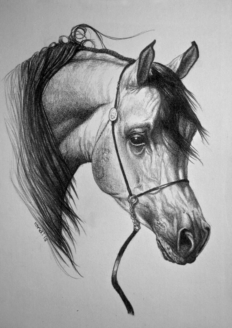 horse drawing coloring pages horse drawing pics at getdrawings free download coloring pages horse drawing
