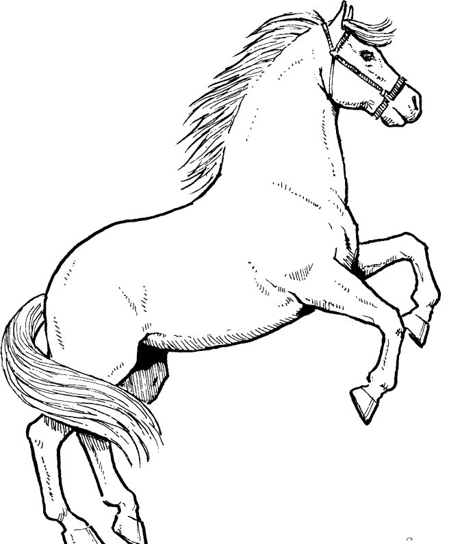 horse drawing coloring pages mustang horse line drawing at getdrawings free download drawing horse pages coloring