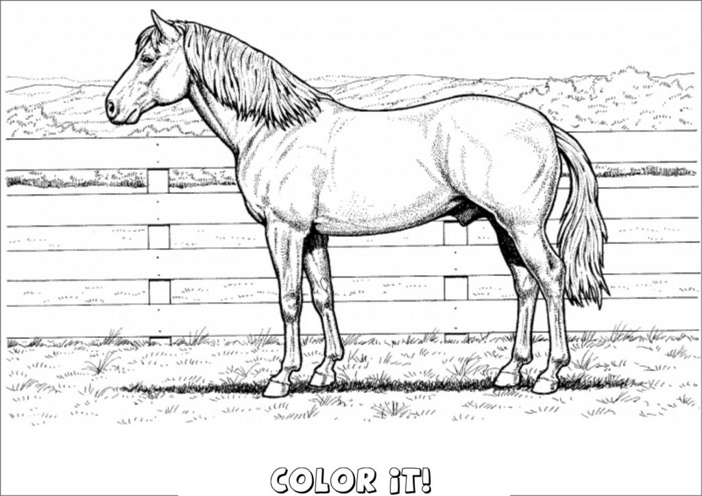 horse pictures to print out horse template animal templates free premium templates horse to print out pictures