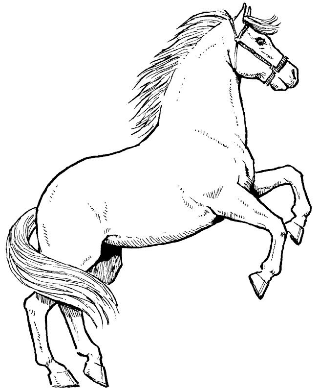 horse pictures to print out small horse coloring pages at getcoloringscom free to horse print out pictures