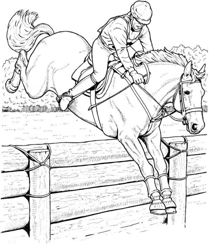 horse show jumping coloring pages 316 best animal coloring pages images on pinterest jumping coloring horse show pages