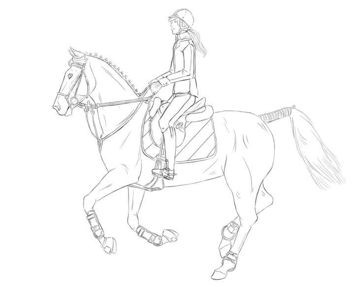 horse show jumping coloring pages 80 best horse line art how to images on pinterest horse show pages coloring jumping