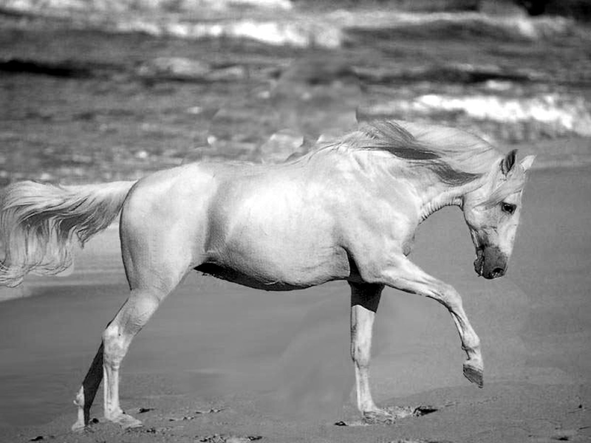horses for free coloring pages of horses printable free coloring sheets horses free for