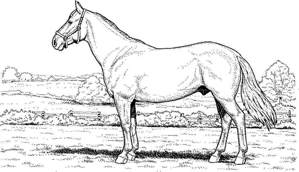 horses pictures to print fun horse coloring pages for your kids printable to horses print pictures
