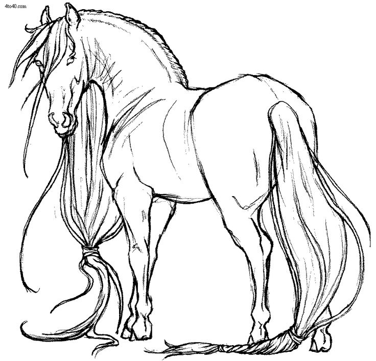 horses pictures to print printable horse outline free download clip art to print horses pictures