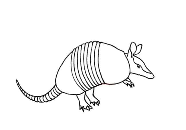 how to draw a armadillo step by step draw and learn armadillo armadillo drawings how a draw step step by armadillo to