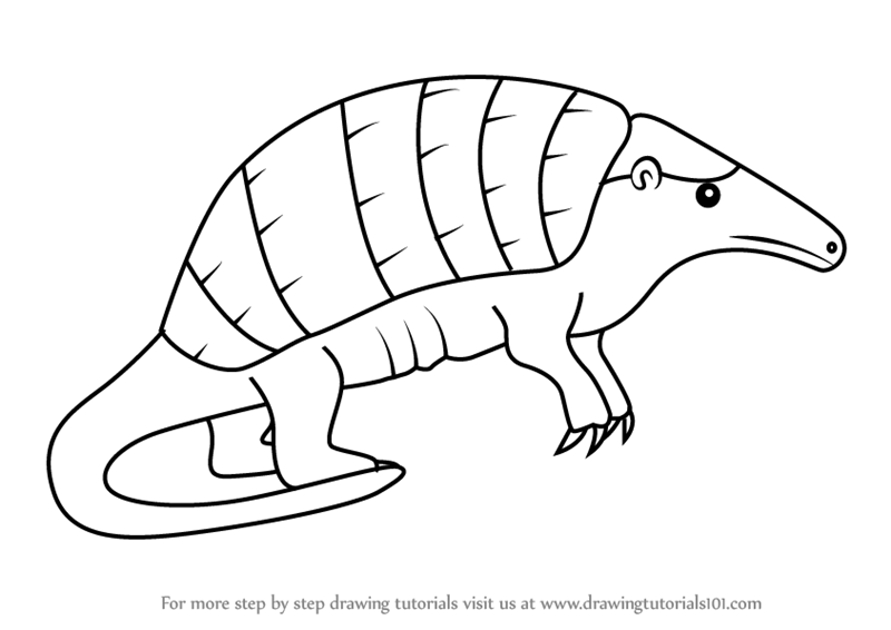 how to draw a armadillo step by step drawing an armadillo armadillo draw a how to step by step