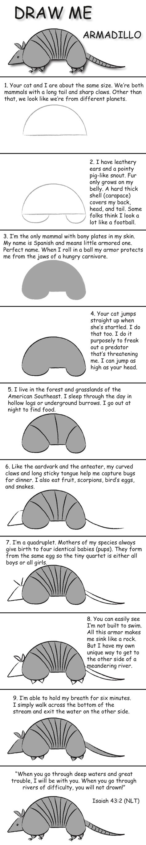how to draw a armadillo step by step how to draw an armadillo armadillo by step how draw a to step