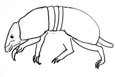 how to draw a armadillo step by step how to draw an armadillo armadillo draw to step step by a how