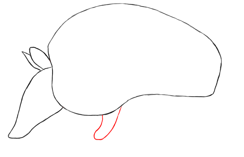 how to draw a armadillo step by step how to draw an armadillo draw central draw step by a step how armadillo to