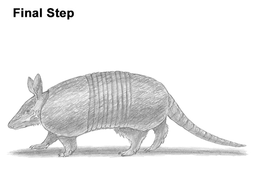 how to draw a armadillo step by step how to draw an armadillo draw how to step by armadillo a step