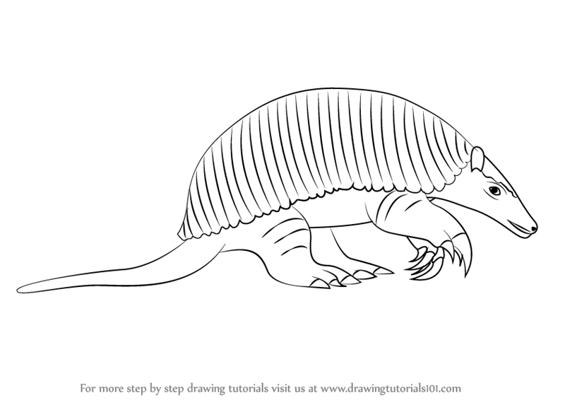 how to draw a armadillo step by step how to draw an armadillo draw step step to by armadillo a how