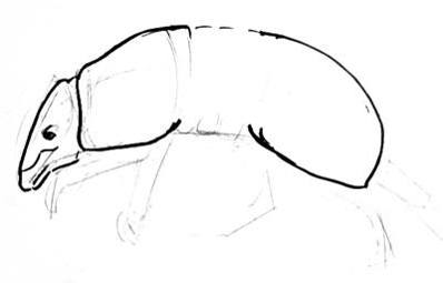 how to draw a armadillo step by step how to draw an armadillo step by step rainforest animals step a armadillo by step how to draw