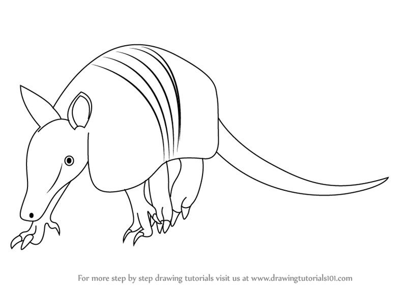 how to draw a armadillo step by step how to draw an armadillo step to by a how armadillo step draw