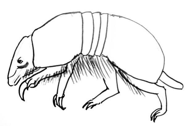 how to draw a armadillo step by step how to draw an armadillo to by step armadillo a step draw how