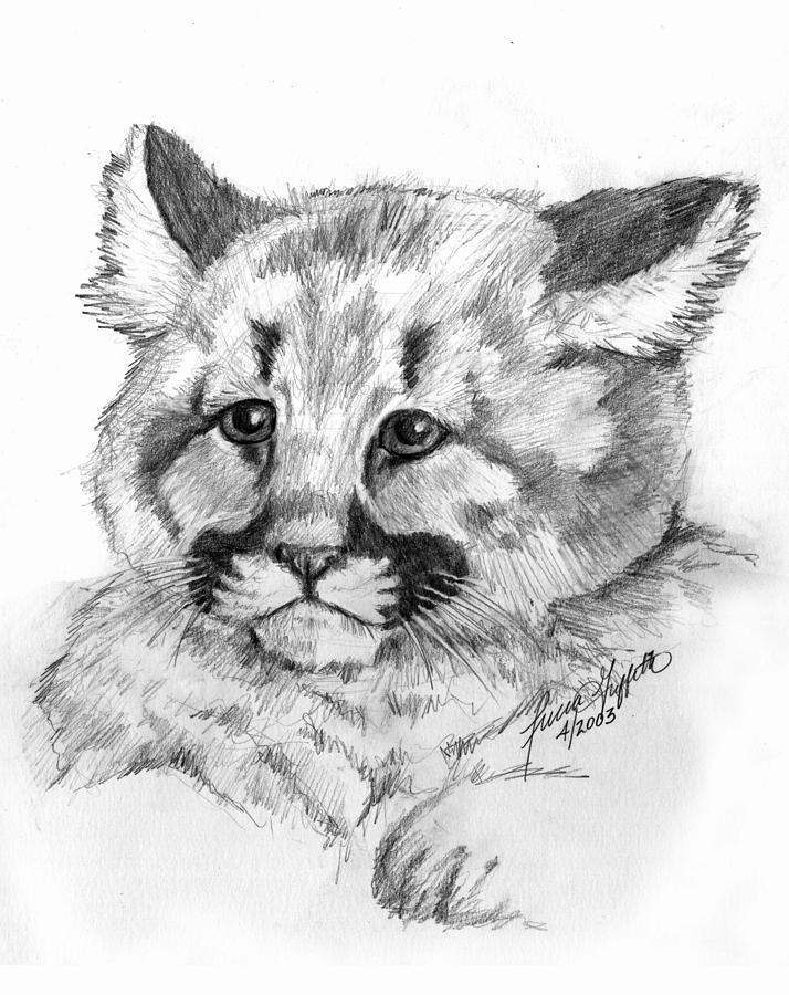how to draw a baby cougar artist lmonier baby cougar to how draw a