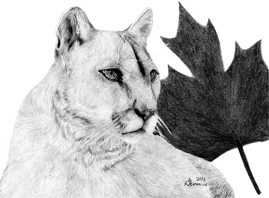 how to draw a baby cougar canadian cougar drawing by kayleigh semeniuk draw a cougar to how baby