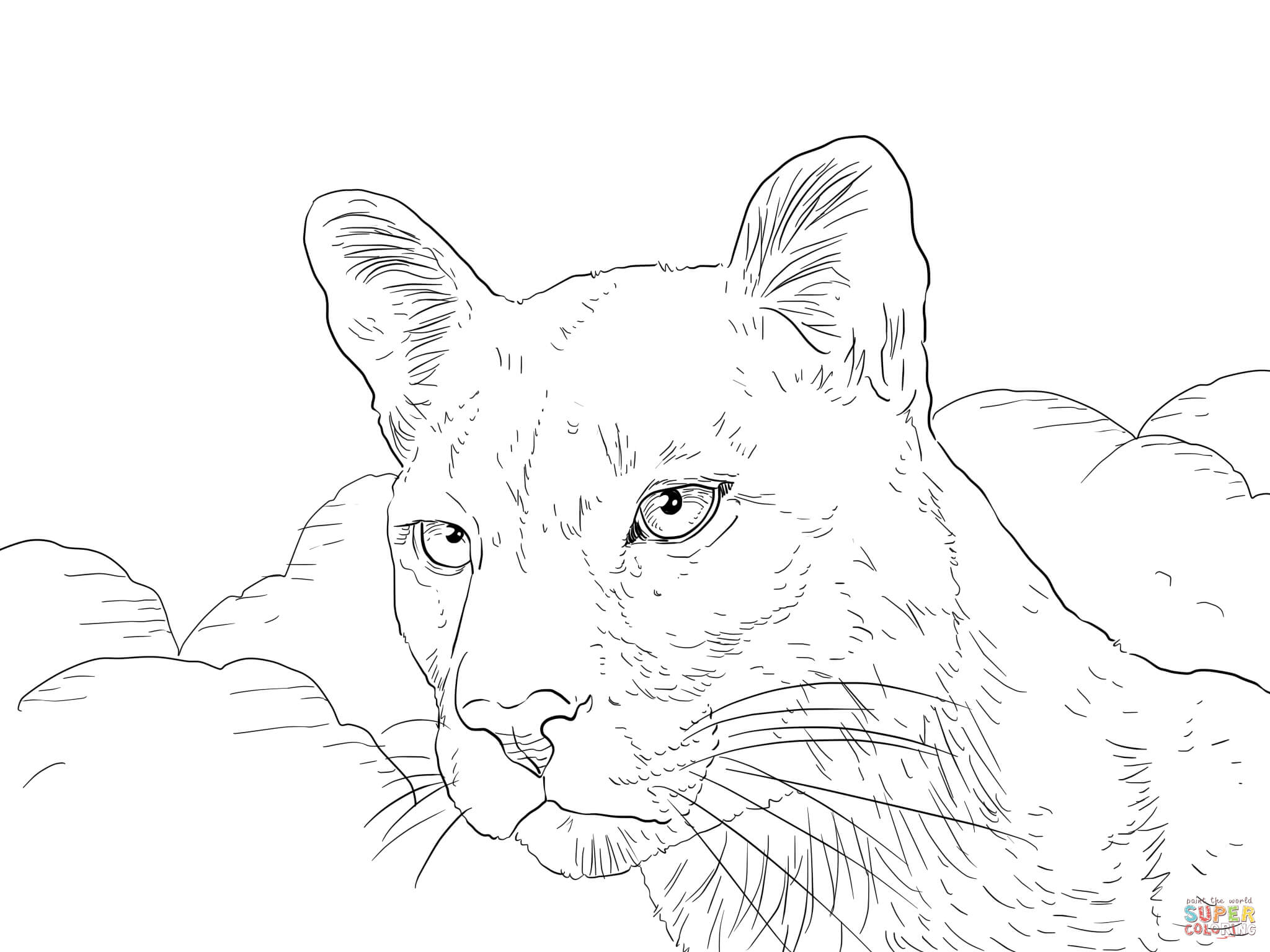 how to draw a baby cougar cougar coloring page free printable coloring pages cougar a baby to draw how