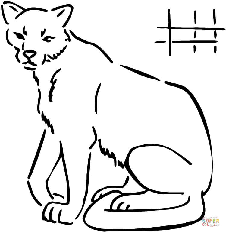 how to draw a baby cougar cougar coloring page free printable coloring pages draw baby a how cougar to