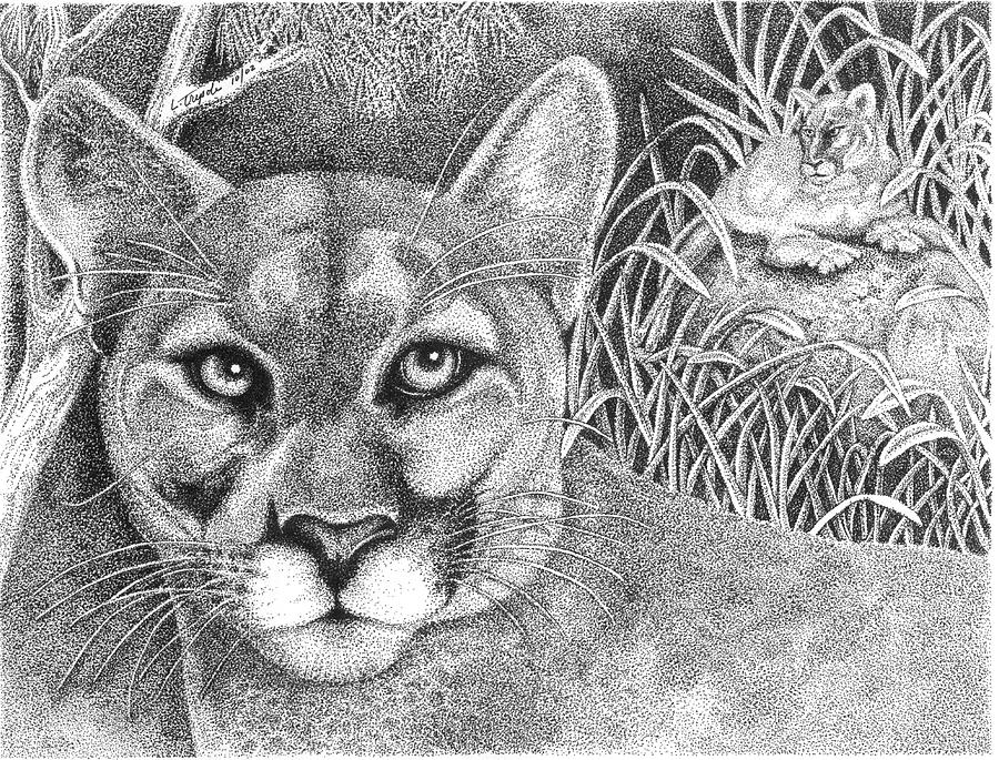 how to draw a baby cougar cougar drawing by lawrence tripoli how cougar to baby draw a
