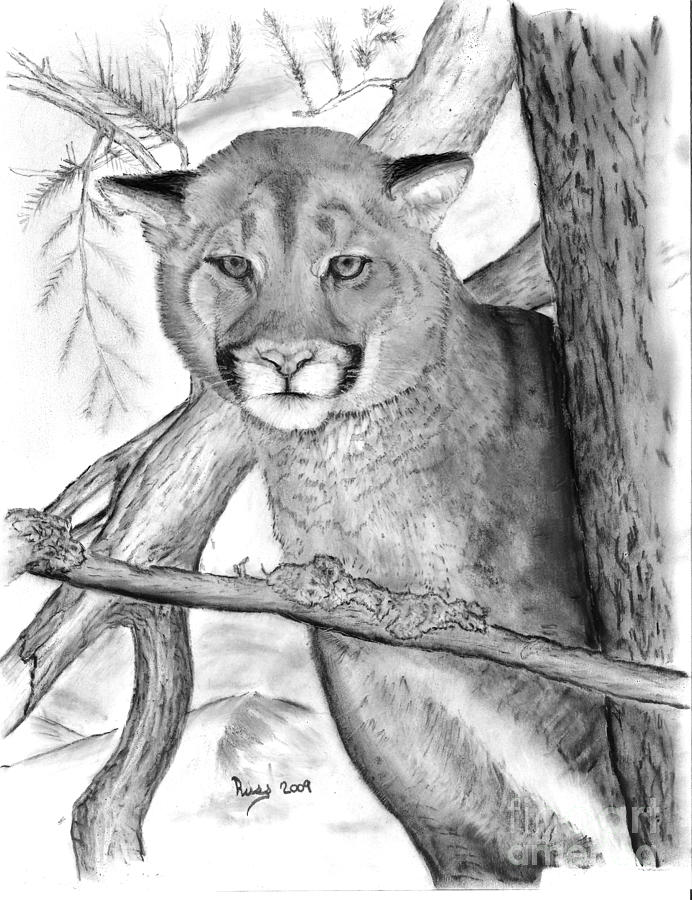 how to draw a baby cougar learn how to draw a cougar wild animals step by step draw to baby how cougar a