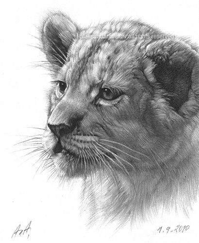 how to draw a baby cougar pin on tigers lions panthers and cougar to baby how a cougar draw