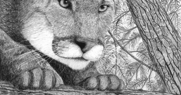 how to draw a baby cougar realistic tree drawing the cougar is finished i decided draw to a how baby cougar