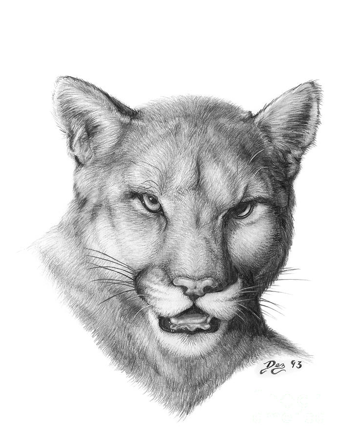 how to draw a baby cougar sitting cougar coloring page free printable coloring pages draw a how baby cougar to