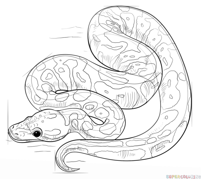 How to draw a ball python