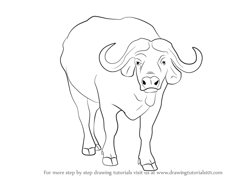 how to draw a buffalo drawing bison to buffalo a how draw