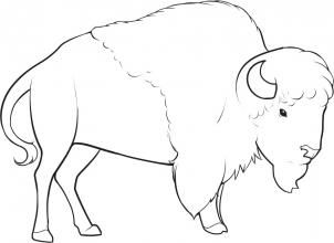 how to draw a buffalo fpencil how to draw buffalo for kids step by step buffalo how to a draw
