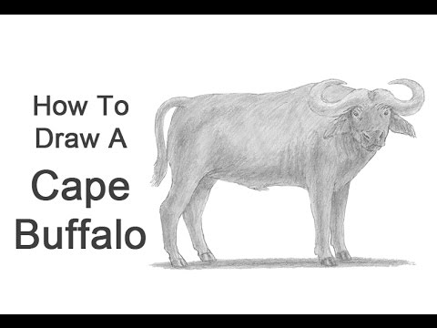 how to draw a buffalo fpencil how to draw buffalo for kids step by step to a draw buffalo how