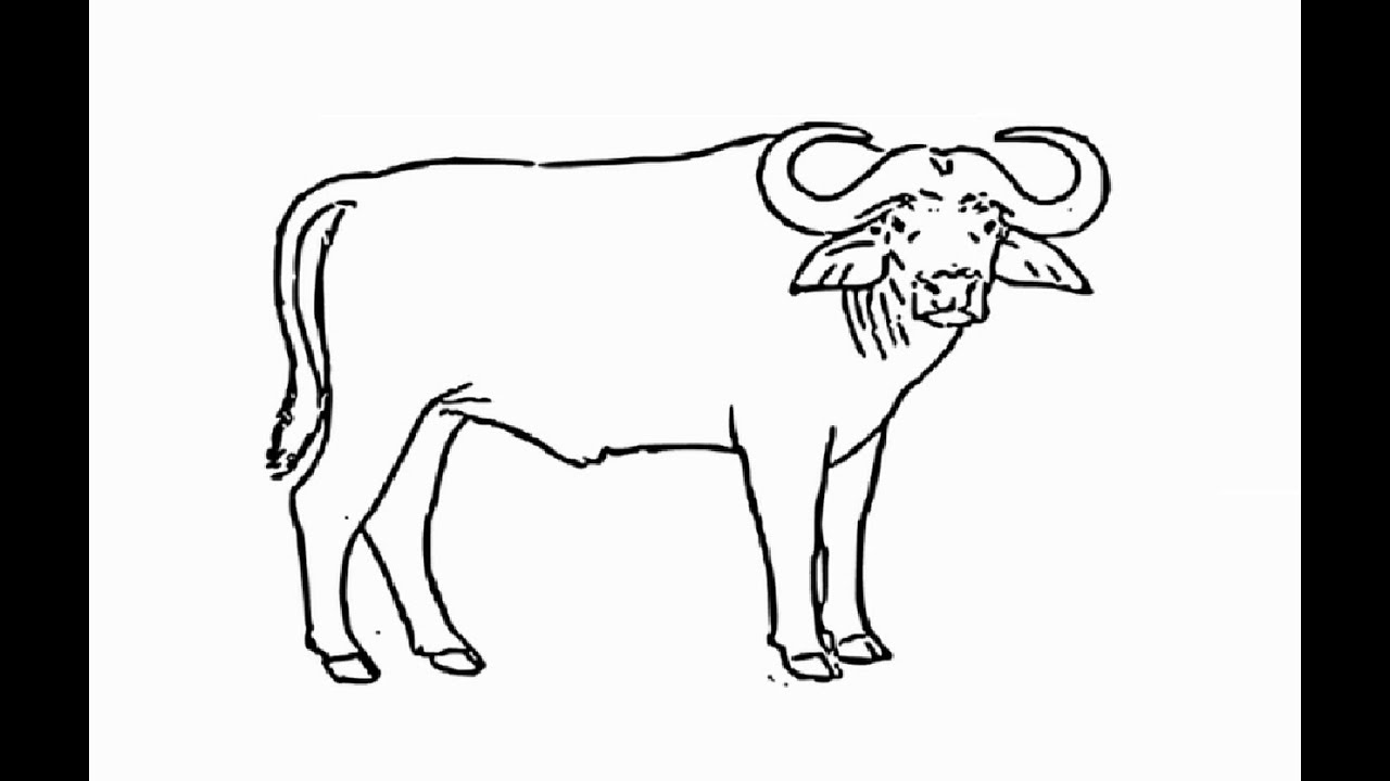 how to draw a buffalo how to draw a bison drawingforallnet draw how buffalo to a