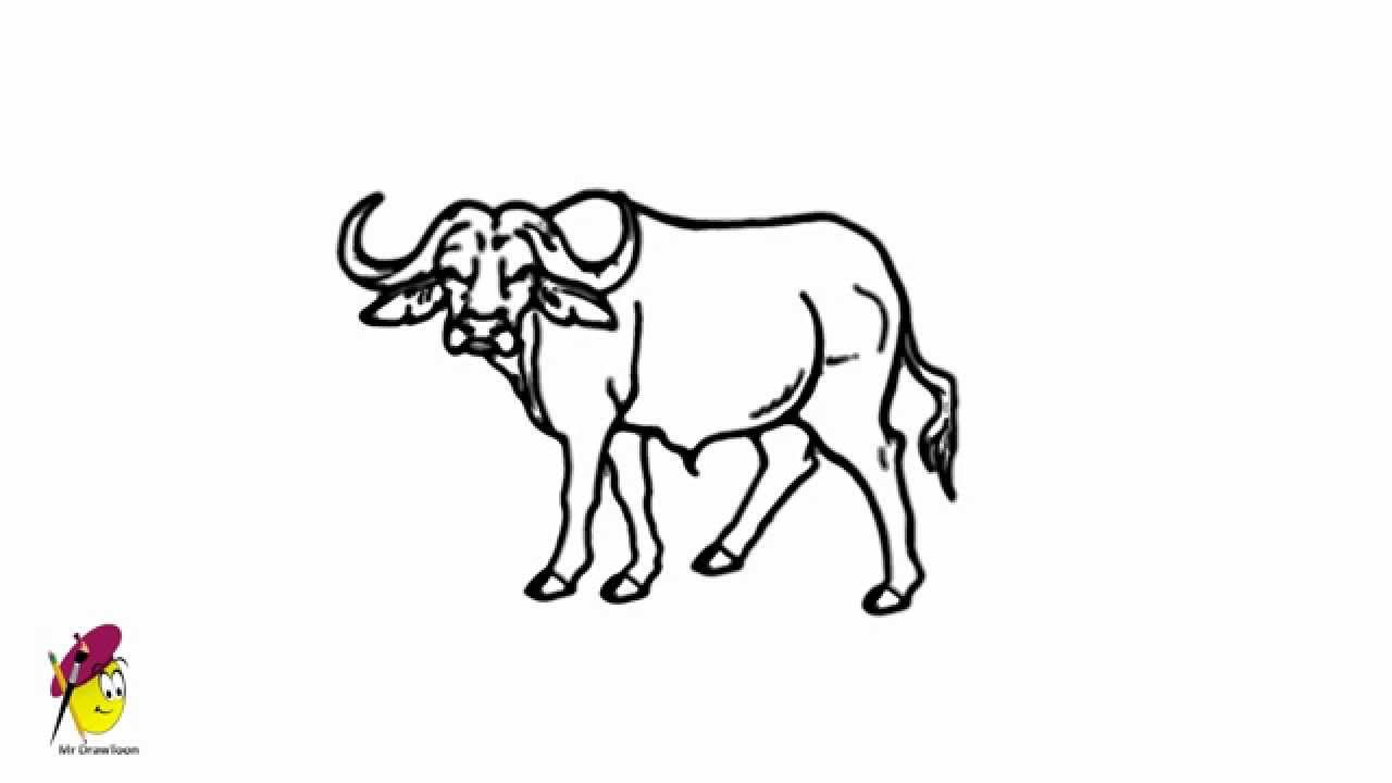 how to draw a buffalo how to draw a bison step by step great plain animals to draw a buffalo how