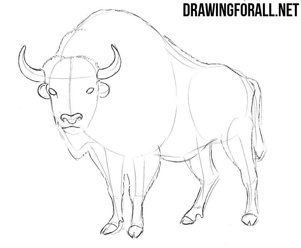 how to draw a buffalo how to draw a buffalo step by step part 2 easy animals 2 how buffalo to draw a