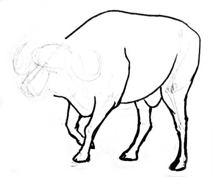 how to draw a buffalo learn how to draw a buffalo farm animals step by step buffalo a to draw how