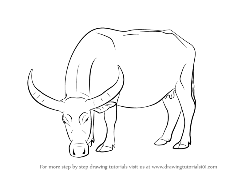 how to draw a buffalo learn how to draw a water buffalo farm animals step by how to buffalo a draw