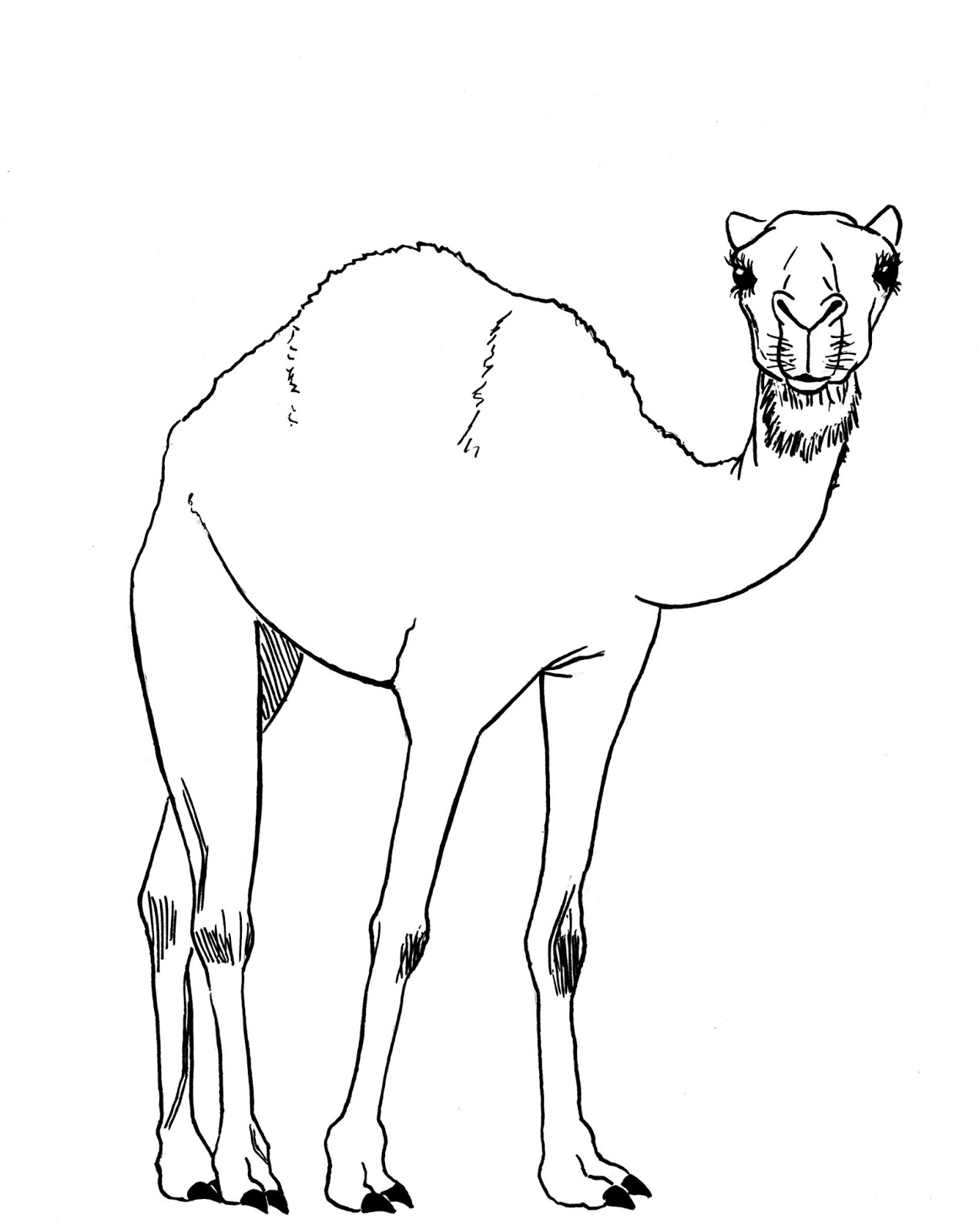 how to draw a camel easy camel drawing at getdrawings free download draw how camel to a