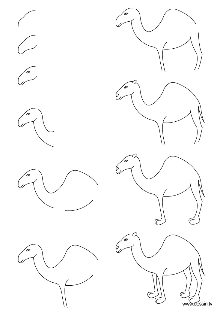 how to draw a camel fpencil how to draw cartoon camel step by step draw a camel how to