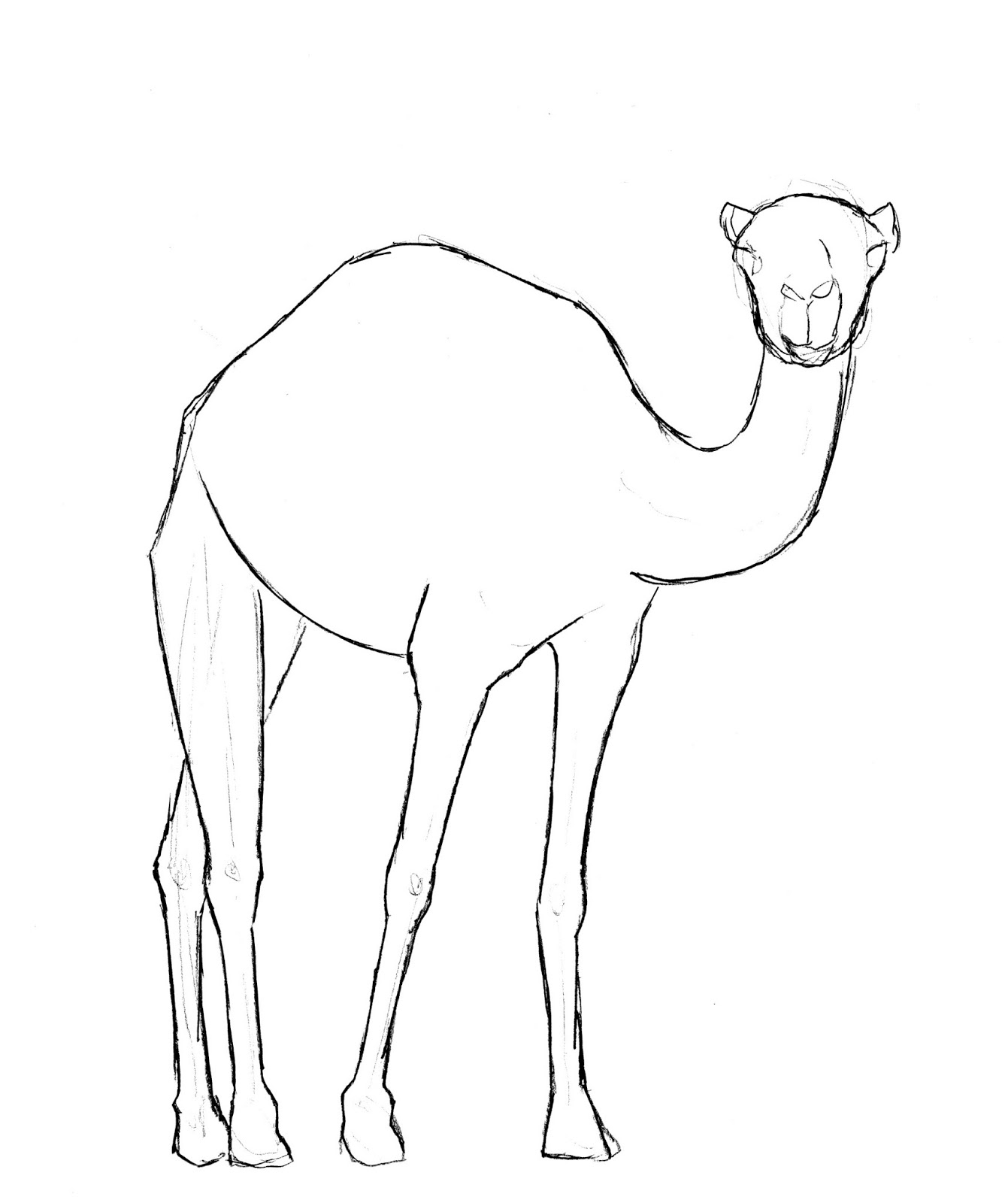 how to draw a camel how to draw a camel draw central how to a draw camel