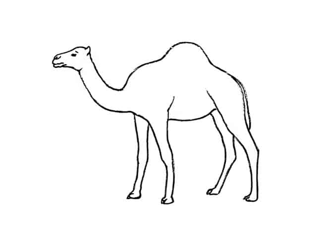 how to draw a camel how to draw a camel drawing lessons draw camel to how a