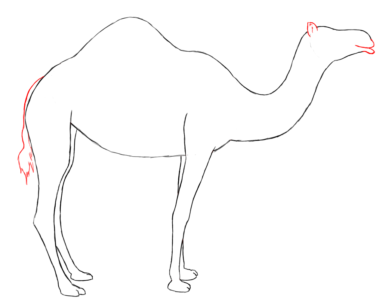 how to draw a camel how to draw a camel drawingforallnet draw to how camel a