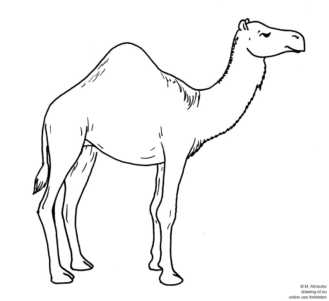 how to draw a camel learn how to draw a camel farm animals step by step draw how camel to a