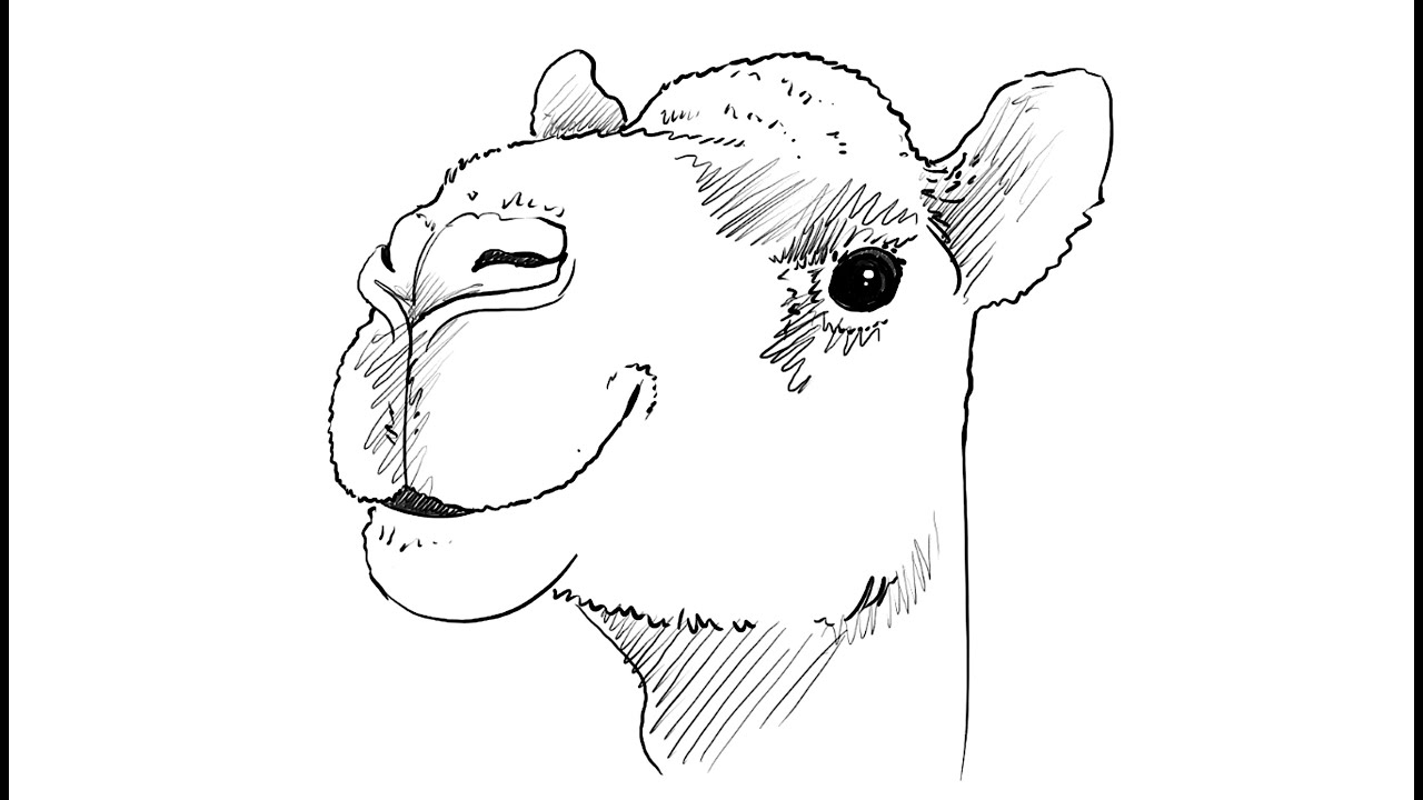 how to draw a camel learn how to draw a dromedary camel other animals step draw to camel a how